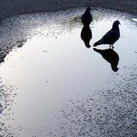 глубокое  синее  небо :: Дмитрий Потапов