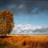 Золотая осень :: Сергей Коновалов