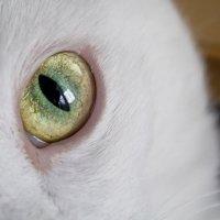 Всевидящее око :: Наталья Панина