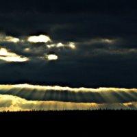 лучи солнца :: Ксения Куривчак