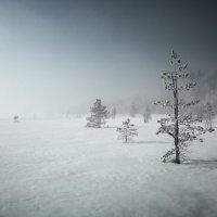 Анна Довгаль - Болото :: Фотоконкурс Epson