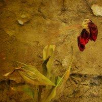 Цветок :: Юрий Рашевский