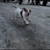 Собака :: DR photopehota