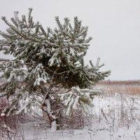 Одиночество :: Геннадий Новов