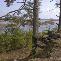 На берегу реки Сож :: Евгений Лимонтов