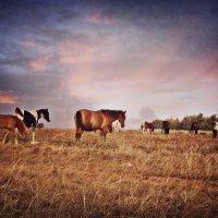 Животные :: Светлана Грабовская
