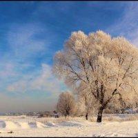 Морозное утро :: Aleksandr Ir