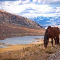 Алтай , плато Укок :: Евгений Бойко