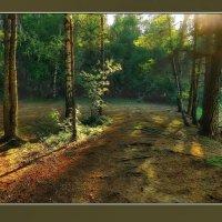 Вечером у лесного озера :: Диана Буглак