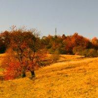 панорама :: Emma Jartera