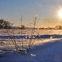 Морозный закат :: Диана Задворкина