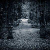 Старый парк... :: Лана Григорьева