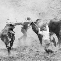 Пахота на волах :: Александр Константинов