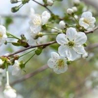 веснацвет :: Вячеслав Freelancer