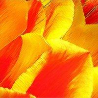 Тюльпаны :: Михаил Дрейке
