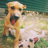 Два веселых друга :: Малышка Навсегда