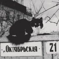 123 :: Лариса Панченко