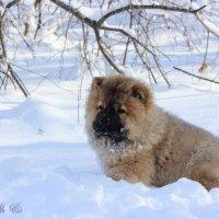 Снежный Buddy :: Кристина Шамсутдинова