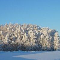 морозное утро :: владимир урванцев