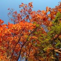 Осенние краски :: Маргарита N