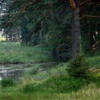 А.из чащи,светятся глаза лесного чудища ! :: Елизавета Успенская