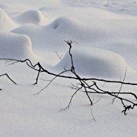 Зигазюлина прогуливалась... :: Юля Стаброва