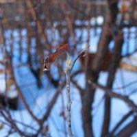 В ожидании весны :: Егор Егоров