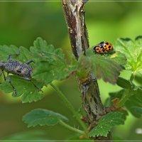 Из жизни насекомых... :: Андрей Медведев