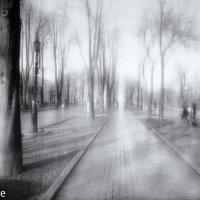 Туман на Приморском бульваре :: Вахтанг Хантадзе