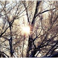 лучи солнца :: Станислав Отто
