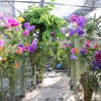сад орхидей :: Светлана Видякина