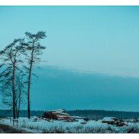 Здесь был лес... :: алексей афанасьев
