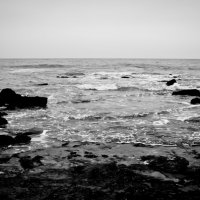 Черно-белое :: Андрей Жуков