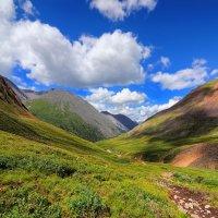 Альпийские луга. :: Виктор Никитин