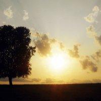 Одинокое дерево :: Тимка Шварц