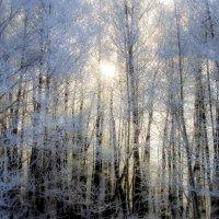 мороз и солнце.и деревья :: владимир гребёнкин