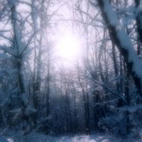 тропинка в зимнем лесу :: владимир гребёнкин