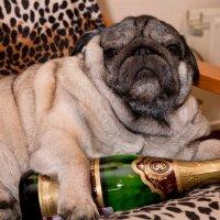 невесту выкупили...шампанское попробуйте... :: Елена Лобанова