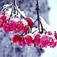 Зима :: Арина Седова