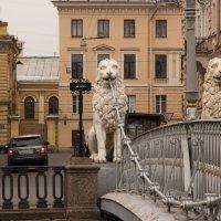 Канал Грибоедова :: Андрей Илларионов