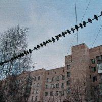 зарисовка :: Анатолий Сысоев