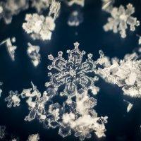 Хоровод снежинок.... :: Соня Орешковая (Евгения Муравская)