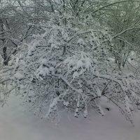 Зимний сад :: Сергей К
