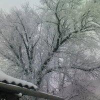 Зимний Клен :: Сергей К
