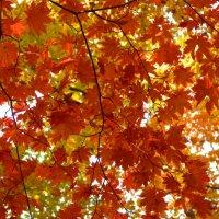 Рыжая грива осени :: Ирина Червинская