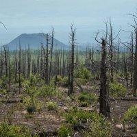Мертвый лес :: Екатерина Белякова
