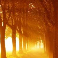солнце в аллеи :: Мария Пикалова