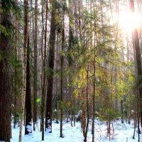 лучик солнца :: Катя Полуянова