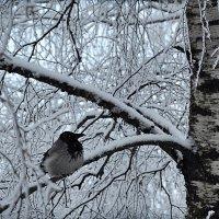 Птичке холодно :: Диана Задворкина