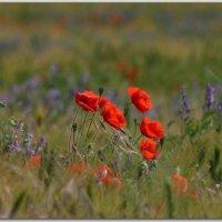 В поле :: Андрей Lyz
